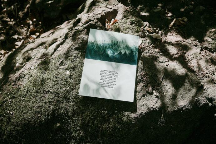 afew x kangaroos mighty forest voucher